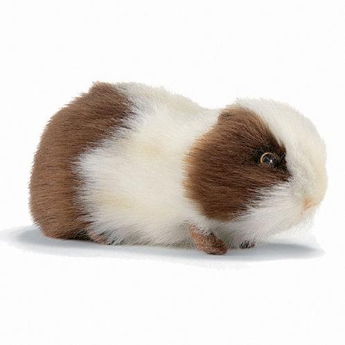 Hansa - Guinea Pig
