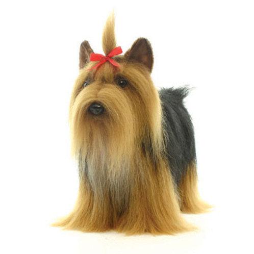 Hansa - Yorkshire Terrier