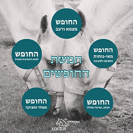 רווחת סוסים וחמורים - חמשת החופשים
