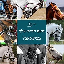 הבעות פנים ככלי לזיהוי כאב בסוסים רכובים