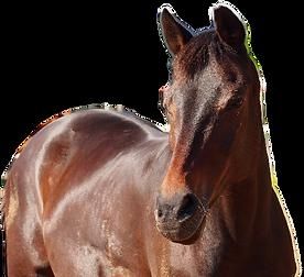 kim_equida_horse