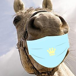 וירוס הקורונה בסוסים