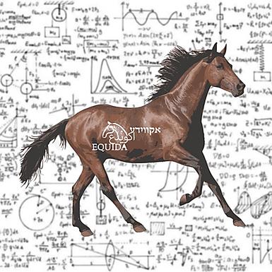 ביומכניקה – מבט מקרוב על טבע התנועה של הסוס