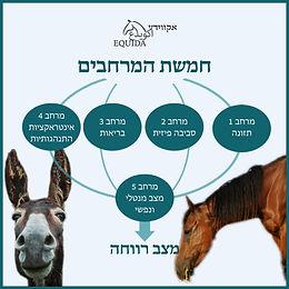 רווחת סוסים וחמורים - חמשת המרחבים (דומיינים)