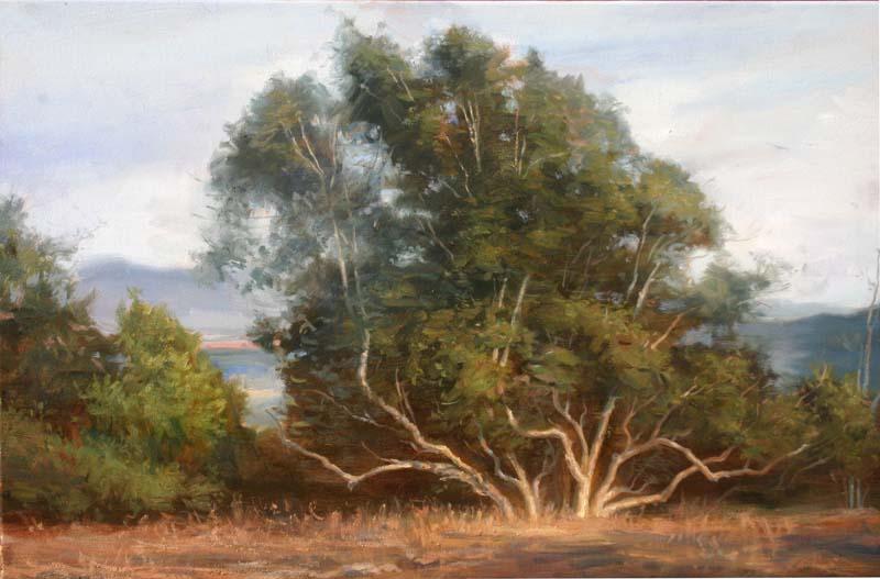 Eucalyptus at sunset 100dp1.jpg
