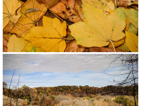 Macros and Landscapes on Thanksgiving