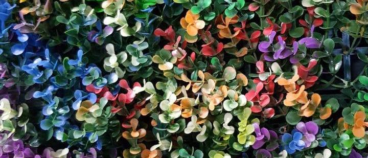 Boxus multicolor