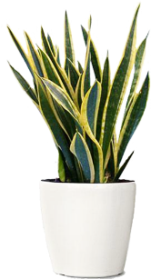 NicePng_potted-plants-png_730875.png