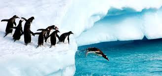 Leader Penguin.jpg
