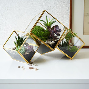 BRINGING OUTDOORS IN: TERRARIUMS