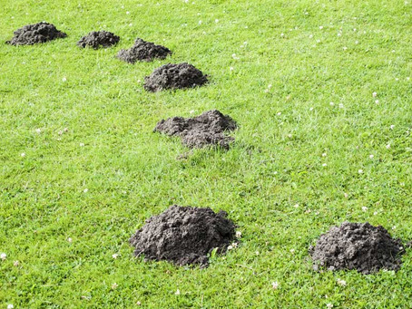All There Is To Know About Moles