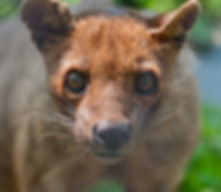 Chahinkapa Zoo Stills (89 of 369)_edited