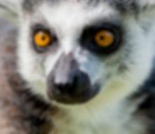 Chahinkapa Zoo Stills (72 of 369).jpg
