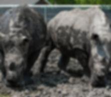 Chahinkapa Zoo Stills (288 of 369).jpg