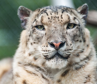 Chahinkapa Zoo Stills (258 of 369).jpg