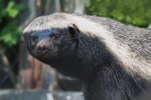 Chahinkapa Zoo Stills (355 of 369).jpg