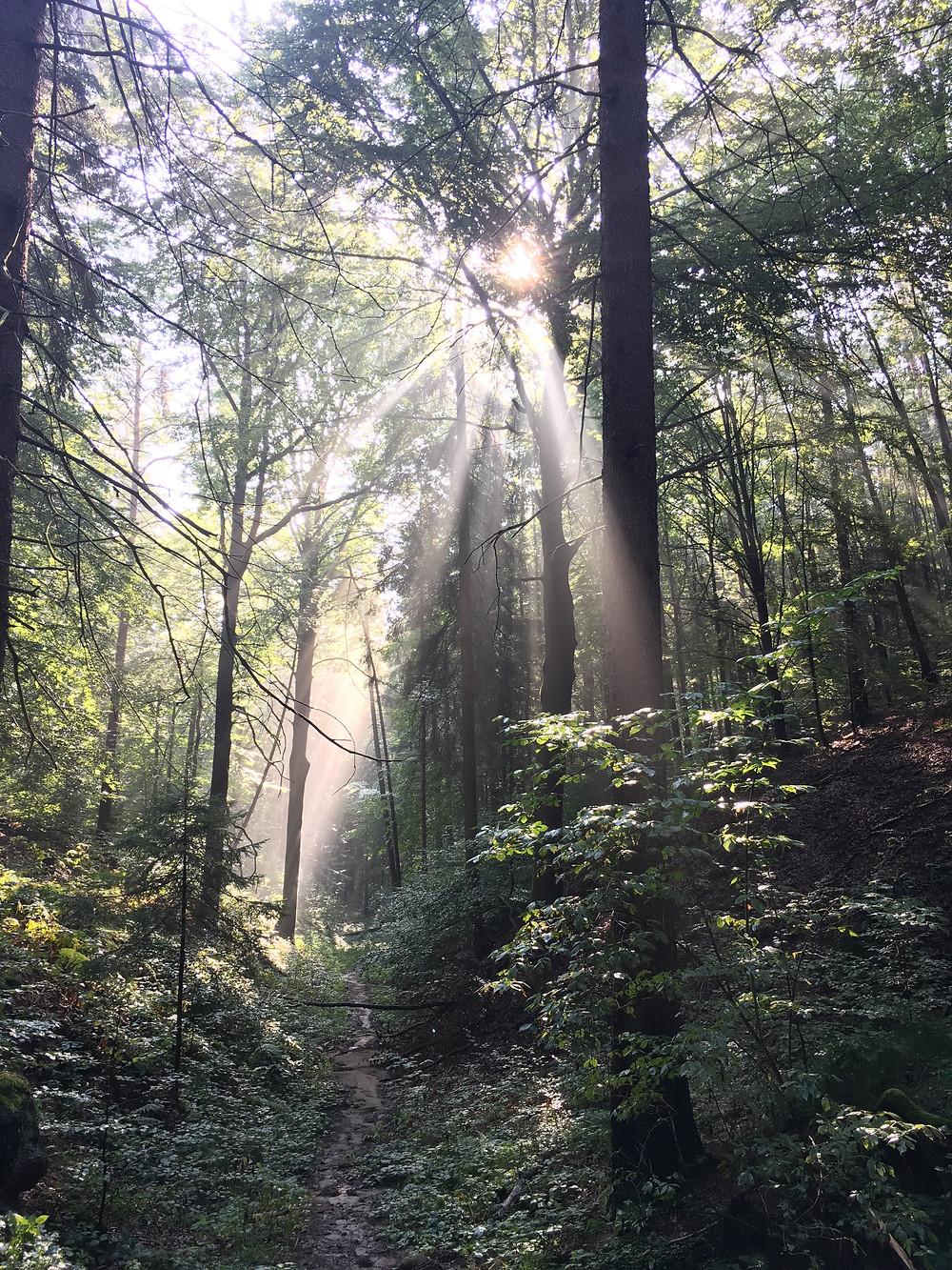 Sonnenstrahlen im Wald als Symbol für den goldenen Mittelweg