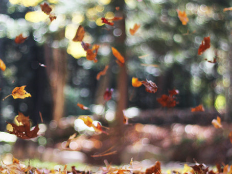Autumn                       An invitation to embrace change