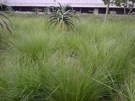 Durban-20121027-00101.jpg