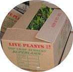 veg box round.jpg