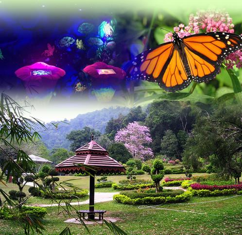 PEN106 Botanical Garden U0026 Butterfly Farm | Penang Tour | Pulau Pinang | FTZ  Travel U0026 Tours Sdn Bhd