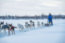 Nick Dogsled-1.JPG