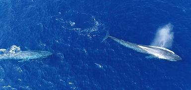 Drone Whale.jpeg
