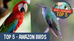 Fun Facts about Amazon Birds