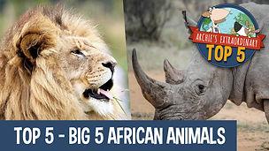 Top 5 African Animals