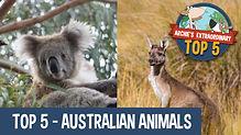 Top 5 australian animals -