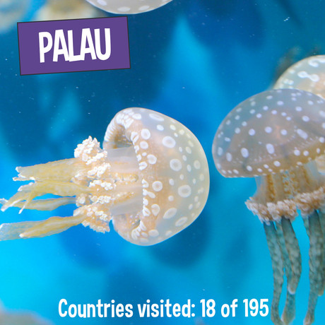 Palau - Golden Jellyfish