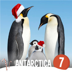 Antarctica Penguins - Christmas around the world