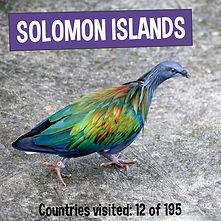 Nicobar Pigeon - Solomon Islands