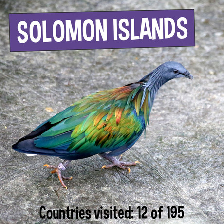 Nicobar Pigeon - Fun Facts about Solomon Islands - Kaia's Worldly Adventure