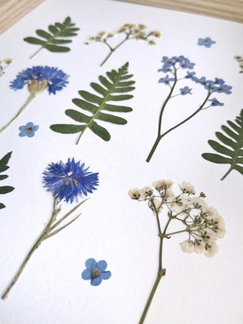 Herbier Bleuet n°14/20 - Atelier Sauvage