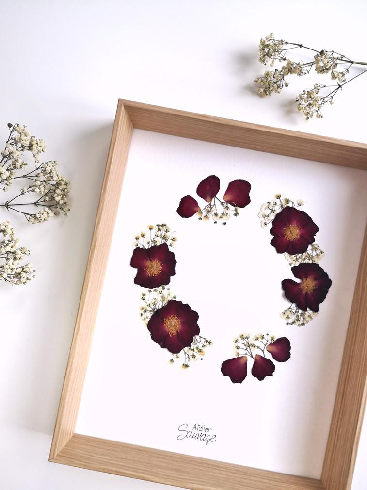 Herbier Fera Rosa n°13/20 - Atelier Sauvage