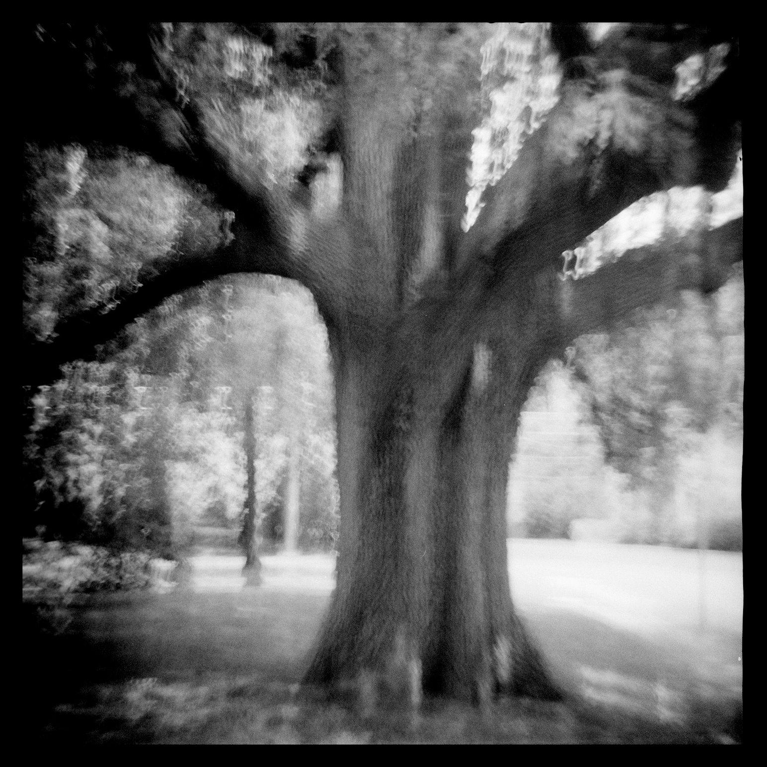 Moving Tree