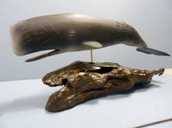 DC whale