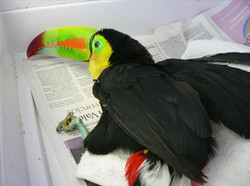 Enfermedades nutricionales en aves d