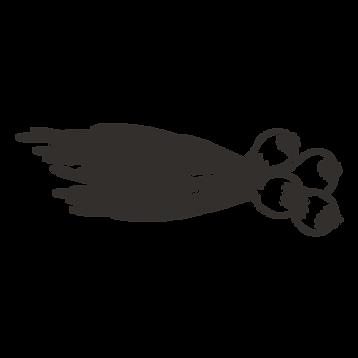cipollotto
