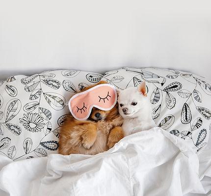 Cuddling Buddies