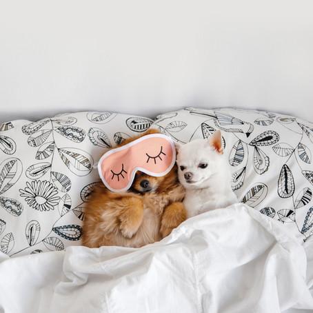 ¿Por qué tu perro no quiere dormir en su cama?