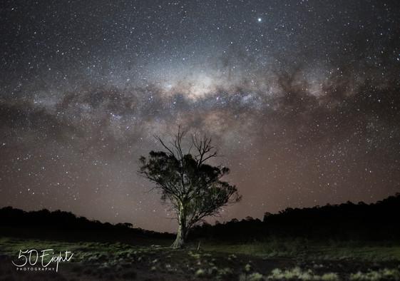 Brayshaw's Tree
