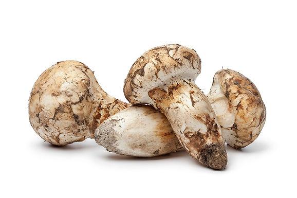 北米産、トルコ産生鮮松茸を販売を始まりました。
