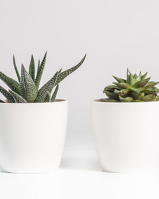 aloe-vera-and-succulent-plant-in-white-c