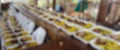 so many plates of food.jpg