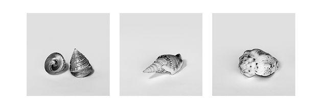 Fine Art Conchas Marinhas