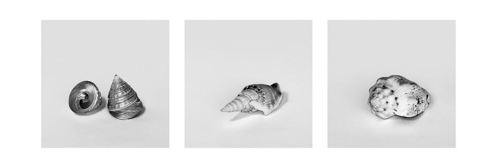 Tríptico Conchas Marinha