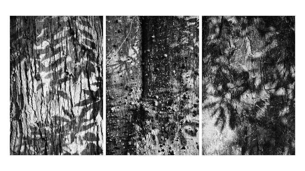 Tríptico Texturas da Natureza
