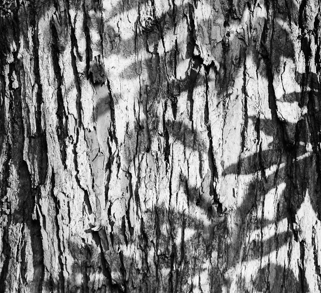 Série - Texturas da Natureza